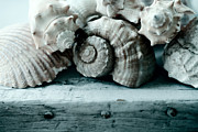 Sea Shell Fine Art Photo Framed Prints - Sea Gifts Framed Print by Bonnie Bruno