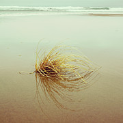 Charmian Vistaunet - Sea Grass - Hipster...