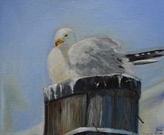 Desiree Rose Metal Prints - Sea Gull Metal Print by Desiree  Rose