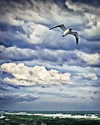 Sea Gull Prints - Sea Gull Soaring Print by Walt Foegelle