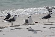 Panama City Beach Posters - Sea gulls 3 Poster by Michelle Powell
