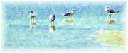 Fort Meyers Framed Prints - Sea Gulls Framed Print by Kathleen Struckle