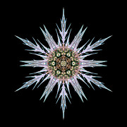 Sea Holly I Flower Mandala Print by David J Bookbinder