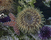 Ocean Creatures Metal Prints - Sea life Metal Print by Ernie Echols
