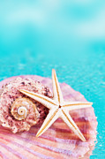 Sea Shell Prints - Sea Life Print by Viaina    