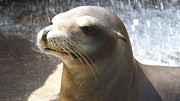 Kimberly-Ann Talbert - Sea Lion