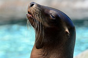 Andrea Silies - Sea Lion Portrait