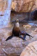 Sea Lion Photos - Sea Lion by Viktor Savchenko