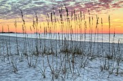 Surises Framed Prints - Sea Oat Sunrise Framed Print by JC Findley