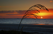 Plant Greeting Cards Posters - Sea Oats and Sunrise Poster by Steven Ainsworth
