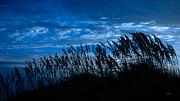 John Pagliuca - Sea Oats at Dawn