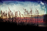 Joan McCool - Sea Oats at Sunrise