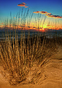 Pea Island Posters - Sea Oats at Sunrise - Outer Banks I Poster by Dan Carmichael