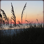 Florida Flowers Posters - Sea Oats at Sunset Poster by Chris Andruskiewicz