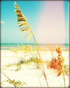 Sea Oats Framed Prints - Sea Oats Photography Light Leaks1 Framed Print by Chris Andruskiewicz