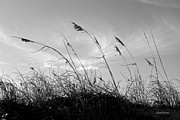 Sea Oats Photo Prints - Sea Oats Silhouette Print by Michelle Wiarda