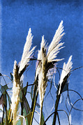 Sea Oats Digital Art Prints - Sea Oats Print by Steve Bailey