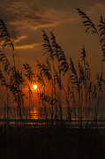 Oats Originals - Sea Oats Sunrise by  Island Sunrise and Sunsets Pieter Jordaan