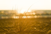 Traverse City Prints - Sea Oats Sunset Print by Sebastian Musial