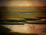 Cape Cod Digital Art Framed Prints - Sea of Grass Framed Print by Lianne Schneider