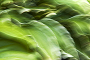 Leaf Abstract Prints - Sea Of Green Print by Christina Rollo
