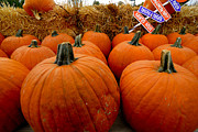 Pumpkin Photos - Sea of Pumpkins by Amy Cicconi
