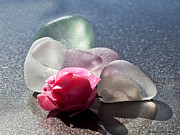 Floral Glass Art Metal Prints - Sea Rose Metal Print by Barbara McMahon