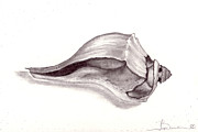 Sea Shell Drawings - Sea Shell 3 by Joyce Blank