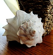 Forms Pyrography Prints - Sea Shell And Basket Print by Yolanda Rodriguez