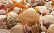 Mark Ross Posters - Sea Shell Background Poster by Mark Ross