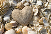 Old Pyrography Prints - sea shell Heart Print by Boon Mee