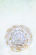 Round Shell Photo Posters - Sea Shell Poster by Stephanie Frey