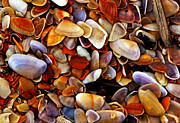 George Bostian - Sea Shells 005