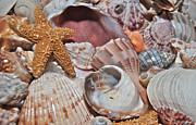 Sea Shell Prints - Sea Shells 1650 Print by Michael Peychich