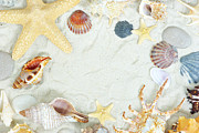 Decorating Pyrography - Sea Shells by Boon Mee