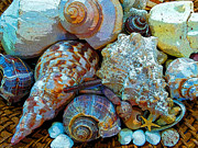 Debbie Chamberlin Posters - Sea Shells Colors 06 Poster by Debbie Chamberlin
