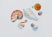 Marine Mollusc Drawings Prints - Sea shells Print by Julia Mikhailiuk