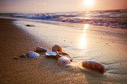 Sea Shells Photos - Sea shells on sand by Michal Bednarek