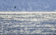 Sea Smoke And Gull Blues Print by Marty Saccone