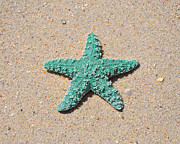 Colorful Sea Print Prints - Sea Star - Aqua Print by Al Powell Photography USA