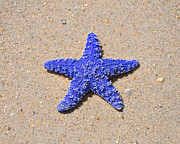 Colorful Sea Print Prints - Sea Star - Dark Blue Print by Al Powell Photography USA