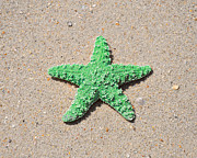 Green Sea Print Posters - Sea Star - Green Poster by Al Powell Photography USA