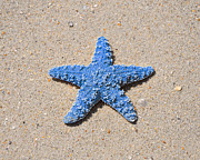 Beachcombing Framed Prints - Sea Star - Light Blue Framed Print by Al Powell Photography USA