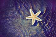 Jenny Rainbow - Sea Star. Memory of the Sunny Days in Tropics