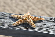 Star Fish Art - Sea Star on Railing by Cathy Lindsey
