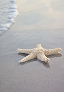Blue Water Art - Sea Star by Samantha Leonetti