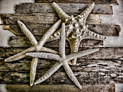 Drift Wood Framed Prints - Sea Stars Framed Print by Colleen Kammerer