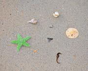 Sea Swag - Green Print by Al Powell Photography USA
