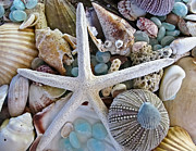 Still Life Tapestries Textiles Prints - Sea Treasure Print by Colleen Kammerer