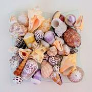 Mary Deal - Sea Treasures